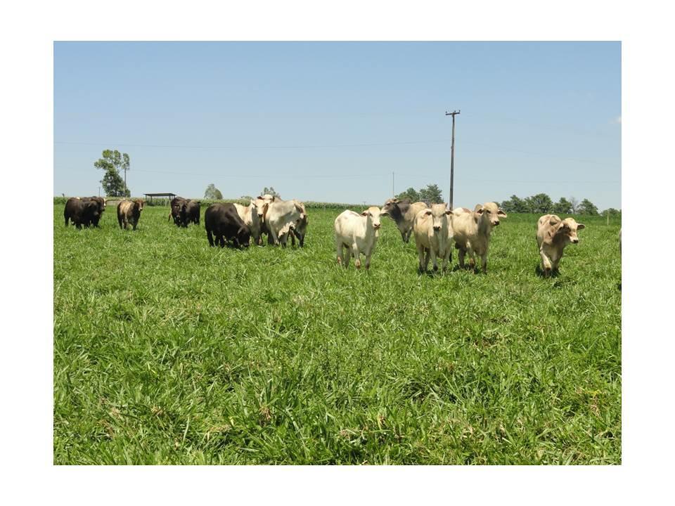 Impacto da intensidade de pastejo na integração lavoura-pecuária