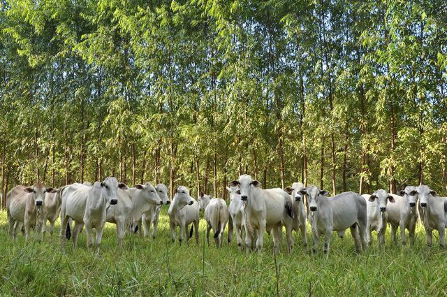Programa de Agricultura de Baixo Carbono perde força em recursos e contratações