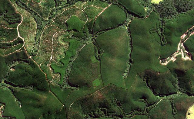 Vegetação protegida, preservada e conservada no Brasil