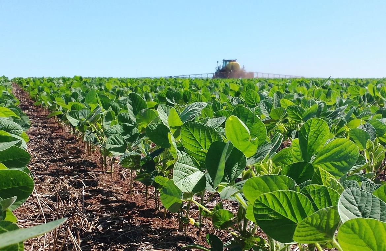Problemas no estabelecimento e crescimento de plantas de soja na safra 2017/18: possíveis causas
