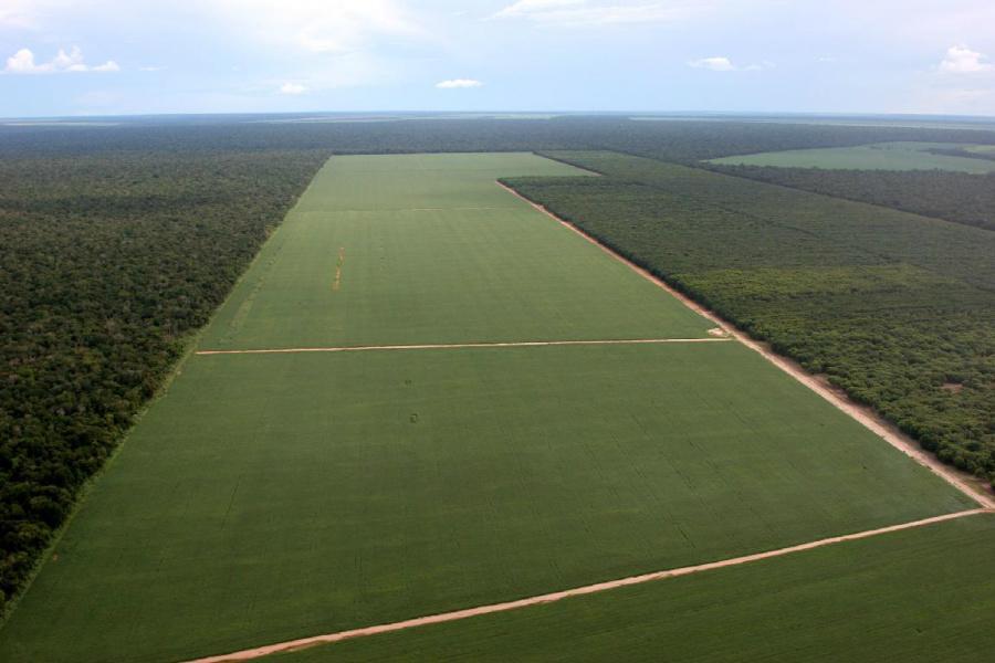Moratória da Soja e a preservação do bioma Amazônico