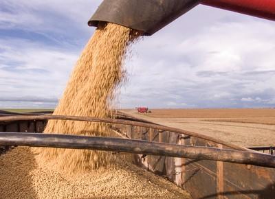 Safra brasileira de soja deve alcançar 112,5 milhões de t, diz USDA