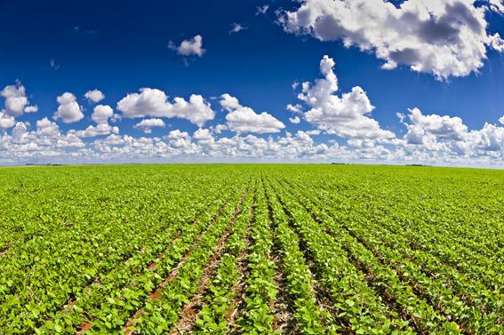 A população de plantas influencia o crescimento de raízes em soja