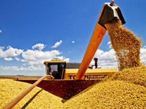 A produção atual de grãos é suficiente para alimentar todo o planeta