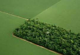 Agricultura é o setor que mais preserva o meio ambiente, afirma Embrapa