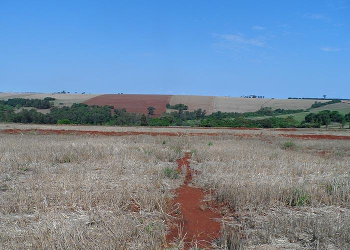 Embrapa explica por que o solo do Paraná sofre tanto com a erosão