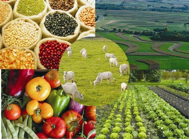 O agronegócio demanda um novo produtor rural
