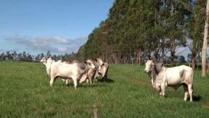 Integração da soja com pastagens em solos arenosos e clima quente