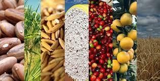 O que esperar da safra brasileira de grãos?