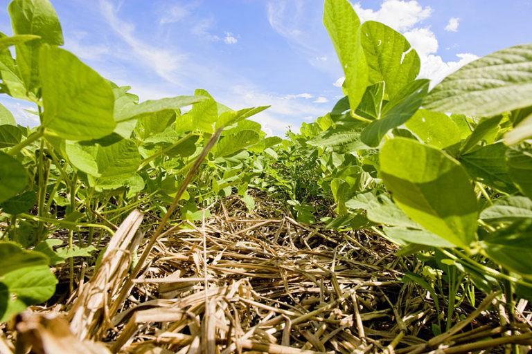 Índice de área foliar ótimo na cultura da soja
