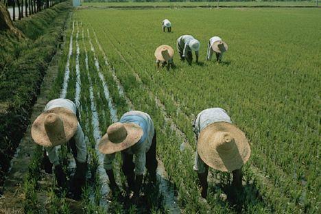 China, grande consumidora e produtora de alimentos do mundo