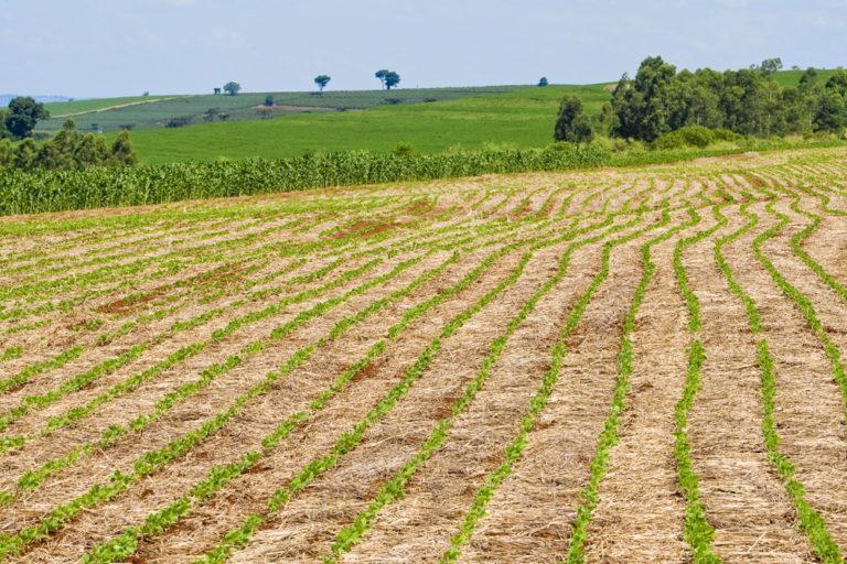 Soja lidera com folga o agronegócio brasileiro