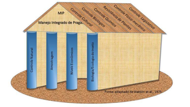 Soja: veja as vantagens na utilização do Manejo Integrado das Pragas