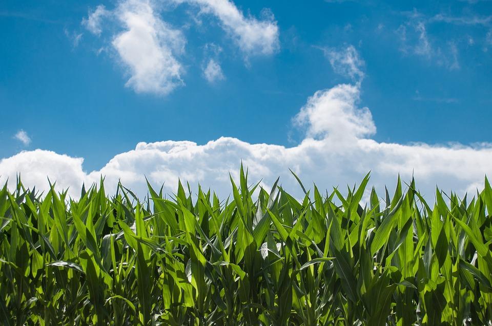 Pioneira em produção de etanol de milho investe em mais três usinas.