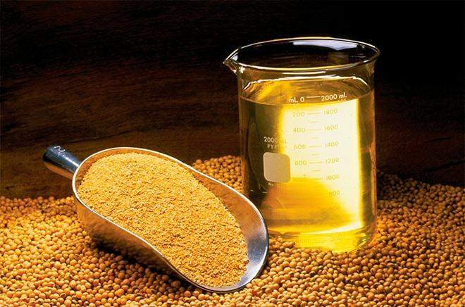 Acidez no grão gera prejuízos para indústria do óleo de soja