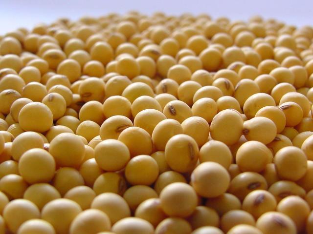 Vigor da semente amplia produtividade da soja