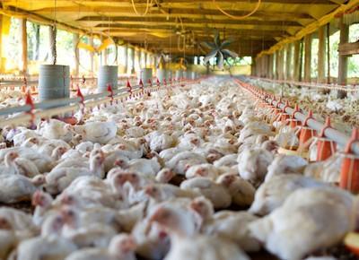 Carne de frango, soja e milho e a inflação pós Plano Real