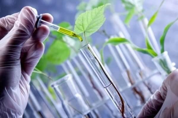 Os benefícios da biotecnologia na agricultura