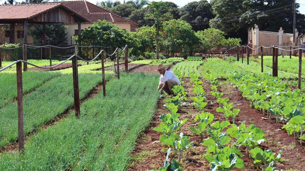 Entenda a importância da agricultura familiar no Brasil