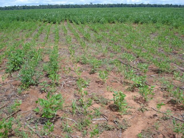 Nematoides: um problema subestimado na soja
