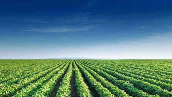 Bioinsumos, a terceira onda da agricultura brasileira