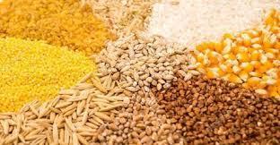 Valor Bruto da Produção Agropecuária (VBP)