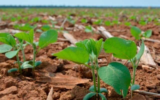 Zoneamento Agrícola de Risco Climático e as áreas com aptidão para o cultivo da soja