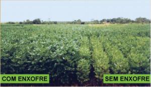 Enxofre, nutriente essencial na produção de aminoácidos e proteínas